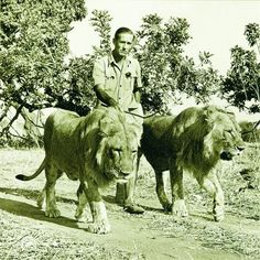 Norman Carr on Safari in the 1950's