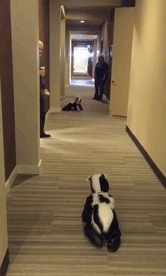 Skunks for crawling babies