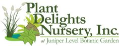 Buy perennial garden plants at our online nursery. Best place to buy plants online! Our mail order catalog has of new flowering perennials for sale. New perennial plants online for sale. Hosta Plants, Shade Plants, Garden Plants, Flowering Plants, Indoor Garden, Aucuba Japonica, Blue Hosta, Florida Native Plants, Online Nursery