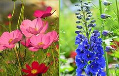 My Favorite Plant Combinations 2