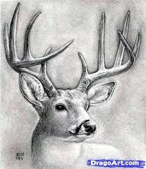 how to draw a deer - Google zoeken
