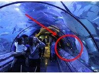 Ternyata ini Sisi Lain Seaworld Ancol yang Belum Diketahui Banyak Orang