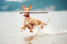 20 year old Ksenia Raykova from Russia takes vivid and playful dog photos