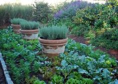 I like the idea of growing chives, rosemary, thyme, etc. in pots in the veggie garden. It's just a photo (no instructions) but it's inspirational.