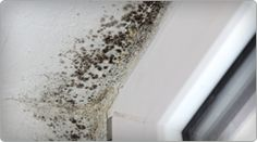 Black mold, understand it's effects on you and your family. Sad, sad story dealing with yesterdays situation....