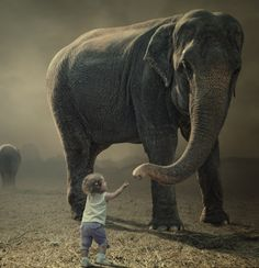 Best of Yoga Philosophy--Weekly Recap ~ Yoga Teachers & Emotional Safety, Bruce Lee & Ashtanga, Will Power, The great Deepak Chopra Debate, and What Can You Learn from An Elephant?