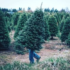 """A trip to a tree farm in Oregon City led to this funny optical illusion captured by photographer Thomas Boyd (@thomasrboyddotcom). """"Simply put, it looks like a tree grew legs and is trying to escape the tree farm,"""" he says. <a class=""""pintag searchlink"""" data-query=""""%23TheWeekOnInstagram"""" data-type=""""hashtag"""" href=""""/search/?q=%23TheWeekOnInstagram&rs=hashtag"""" rel=""""nofollow"""" title=""""#TheWeekOnInstagram search Pinterest"""">#TheWeekOnInstagram</a> Photo by @thomasrboyddotcom"""