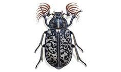 The French Painter Bernard Durin's Close Look at Insect Life - NYTimes.com