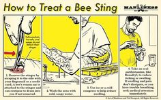If you find yourself at the business end of a stinger... #bees  #savethebees  #gardening