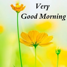 Good Morning Images – Today I am Share With You Latest Free New Good Morning Images , HD Good Morning Photo Pictures , Top Good Morning Images Best Good Morning Images For Whatsaap & Facebook . Very Good Morning Images, Good Morning In Hindi, Good Morning Beautiful Quotes, Good Morning Photos, Morning Pictures, Good Morning Wishes, Wallpaper Pictures, Photo Wallpaper, Pictures Images