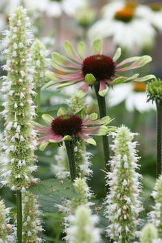 Frøken Solhat: Perfekte partnere Unique Gardens, Beautiful Gardens, Beautiful Flowers, Cut Flower Garden, Garden Structures, Gras, Green Flowers, Dream Garden, Trees To Plant