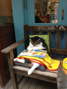 Curled up with a blanket AND a book, this is our kind of cat! #cats #catlovers