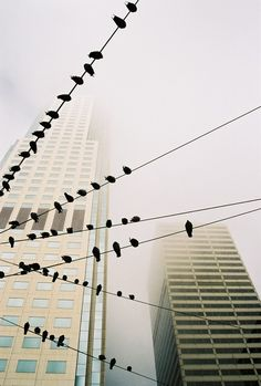 Photo and caption by Matthias Luetolf. Strolling through downtown SF during our vacation, the birds sitting on the wires and skyscrapers in the foggy background caught my attention. A lucky shot! Photo Location: San Francisco