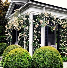 Pool house - love the clipped hedges, rose vines, architecture, green and white - Tory Burch