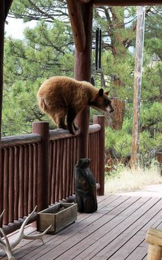 Little Bear Cabin Nature Animals, Baby Animals, Cute Animals, Walk In The Woods, Cabins In The Woods, Black Bear, Brown Bear, Wild Life, Beautiful Creatures