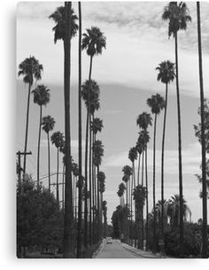 'Vintage Black & White California Palm Trees Photo' Canvas Print by BravuraMedia Poster Black And White, Black And White Picture Wall, Black And White Pictures, Black White, Grey Pictures, Photo Wall Collage, Photo Canvas, Black Aesthetic Wallpaper, Aesthetic Wallpapers