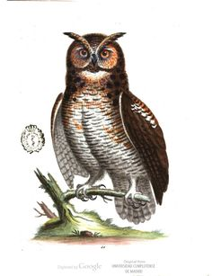 The great horned owl. A Natural History of Birds, Part 2, by George Edwards.#ornithology #birds