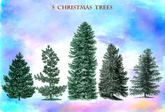 5  Christmas  treesTransparent background Download by AszArt