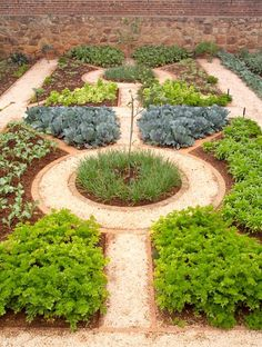 Klassisk örtagård med kvarter och tegelkanter