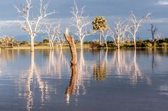 Lake Manze, Selous Game Reserve by Sandy Scott on 500px