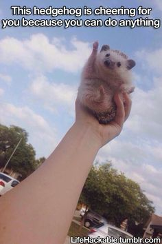 this hedgehog is cheering for you because you can do anything
