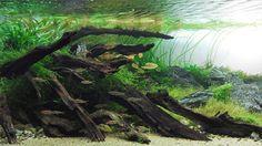The terrarium is back, revived for a new generation - Los Angeles Times Nature Aquarium, Planted Aquarium, Aquarium Ideas, Betta Tank, Fish Tank, Exotic Plants, Tropical Plants, Aquascaping Plants, Terrarium Plants