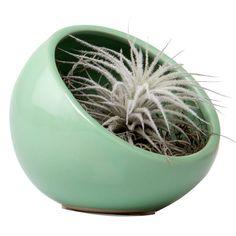 contemporary-chive-halfmoon-green-ceramic-succulent-airplant-colorful-terrarium