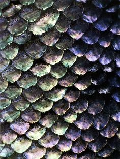 Fish Scales - beautiful colors
