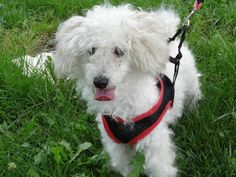 Meet Buddy! This sweet little guy is new to our rescue! Stay tuned for more info!