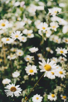E se le regalassi i petali dell'intero mondo?