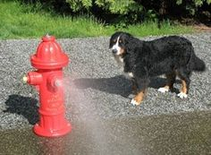 Fire Hydrant Dog Park