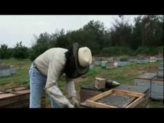 Who Killed The Honey Bee? (BBC Documentary) Everyone should watch this and then plant all the flowers that you can. Organic ways to save our earth. Save Our Earth, Sustainable Farming, See Videos, Bee Happy, Grow Your Own Food, Green Life, Bee Keeping, Farm Life, Ecology