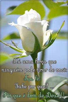 "Flores e frases: Efésios 2: 8 ""Porque pela graça sois salvos, media... Peace Love And Understanding, Jesus Loves Me, Spanish Quotes, Morning Images, Spiritual Quotes, Prayers, God, Thoughts, Jesus Prayer"