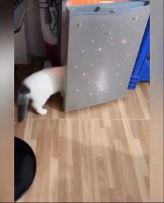 Funny Cat Wallpaper, Funny Cats, Funny Kitties, Cute Cats, Funny Kittens