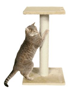 TRIXIE Pet Products Espejo Scratching Post : Cat Houses And Condos : Pet Supplies $29.95