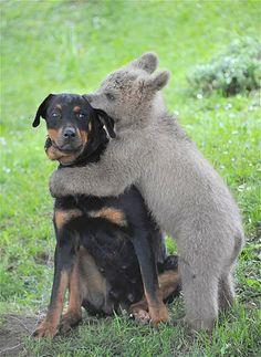 Image: Brown bear cub and dog (© Srdjan Zivulovic/Reuters)