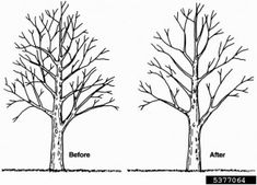Tree Trimming & Pruning: Tips & Techniques