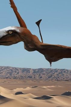 Fossil Hotbed Reveals New, Scary Flying Reptile