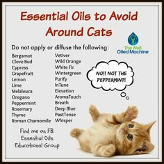 doterra essential oils for cats Are Essential Oils Safe, Essential Oil Uses, Young Living Essential Oils, Vetiver Oil, Oils For Dogs, Young Living Oils, Doterra Essential Oils, Yl Oils, Cat Health