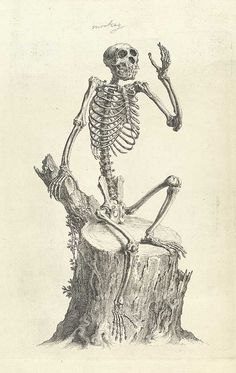 osteographia