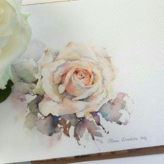 best Olena Duchene images by Ayako M on . Watercolor Rose, Watercolor Cards, Watercolor Illustration, Watercolour Painting, Painting & Drawing, Watercolors, Watercolour Tutorials, Watercolor Techniques, Art Aquarelle