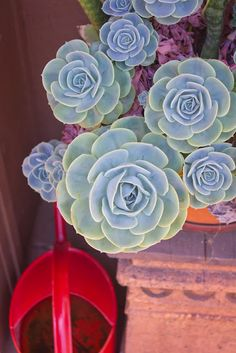 Creative container garden with Succulents