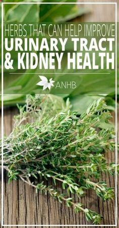 Herbs That Can Help Improve Urinary Tract and Kidney Health - All Natural Home and Beauty