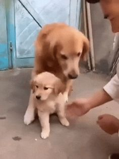 No touch, human.#funny #lol #lolzonline