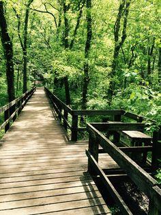 Walking trail at Radnor Lake Nashville, Tennessee