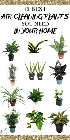 12 Best Air Cleaning Houseplants That Are Impossible To Kill! (no green thumbs needed) | The Mummy Front