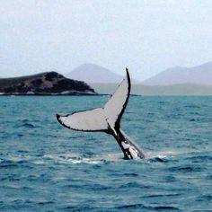 Taken from our yacht NYEKI near Great Keppel Island.