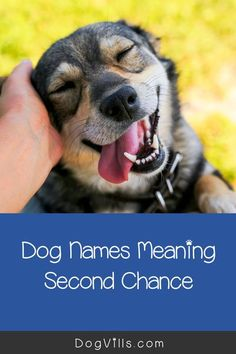 Dog names meaning second chance make for some of the most beautiful ideas for rescue dogs. After all, by adopting a dog from a shelter or rescue group, you�re giving him another chance to live happily ever after. Beautiful Dog Names, All About Puppies, Dog Training Tips, Brain Training, Funny Dog Pictures, Names With Meaning, Girl And Dog, Star Wars Characters, Dog Friends