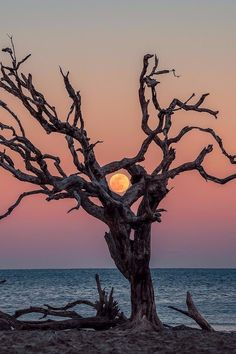 Blood moon on the rise Jekyll Island Beautiful Moon, Beautiful World, Jekyll Island, Blood Moon, Closer To Nature, Belle Photo, Beautiful Landscapes, Mother Nature, Nature Photography