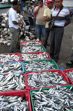 Puesto de pescado en Borneo